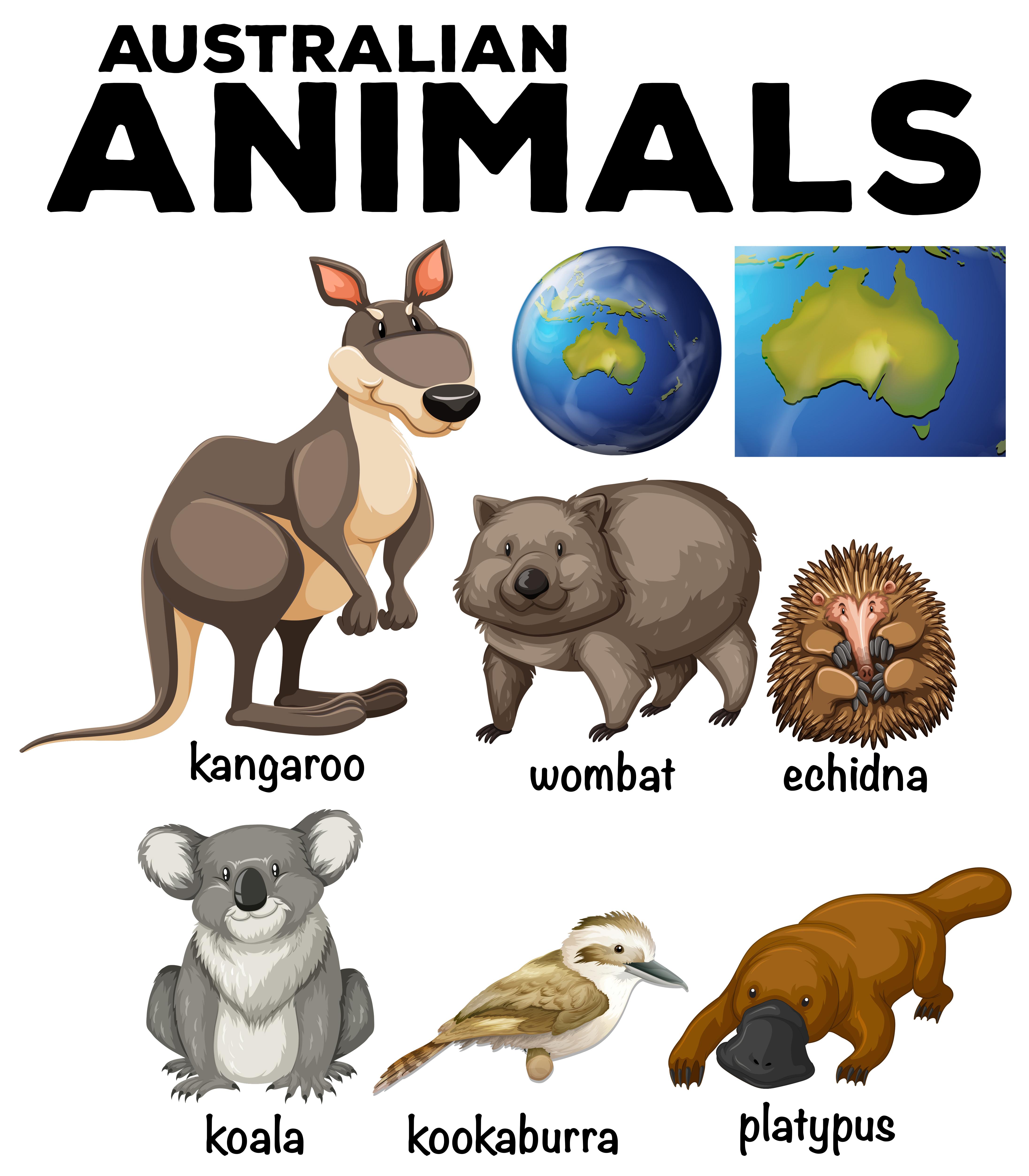 zwei Koalas Grußkarte Australien
