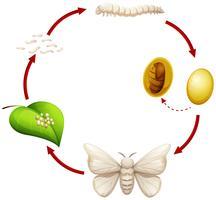 Lebenszyklus einer Seidenraupe