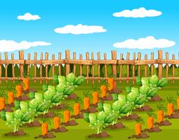 Field of food crops