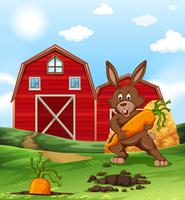 Brown rabbit and carrot on the farm