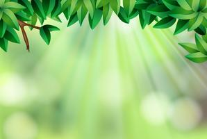 Background template with leaves and green light