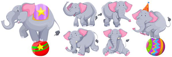 Gray elephants in different actions