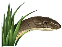 Wild snake behind the bush vector