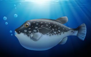 Pez globo en el océano profundo