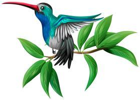 Un colibrí colorido sobre fondo blanco