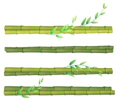 A set of bamboo on white background vector