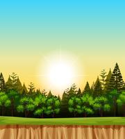 Waldszene mit Bäumen auf der Klippe