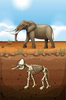 Elefante en el suelo y fósil subterráneo.