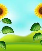 Zonnebloem op onduidelijk beeldachtergrond