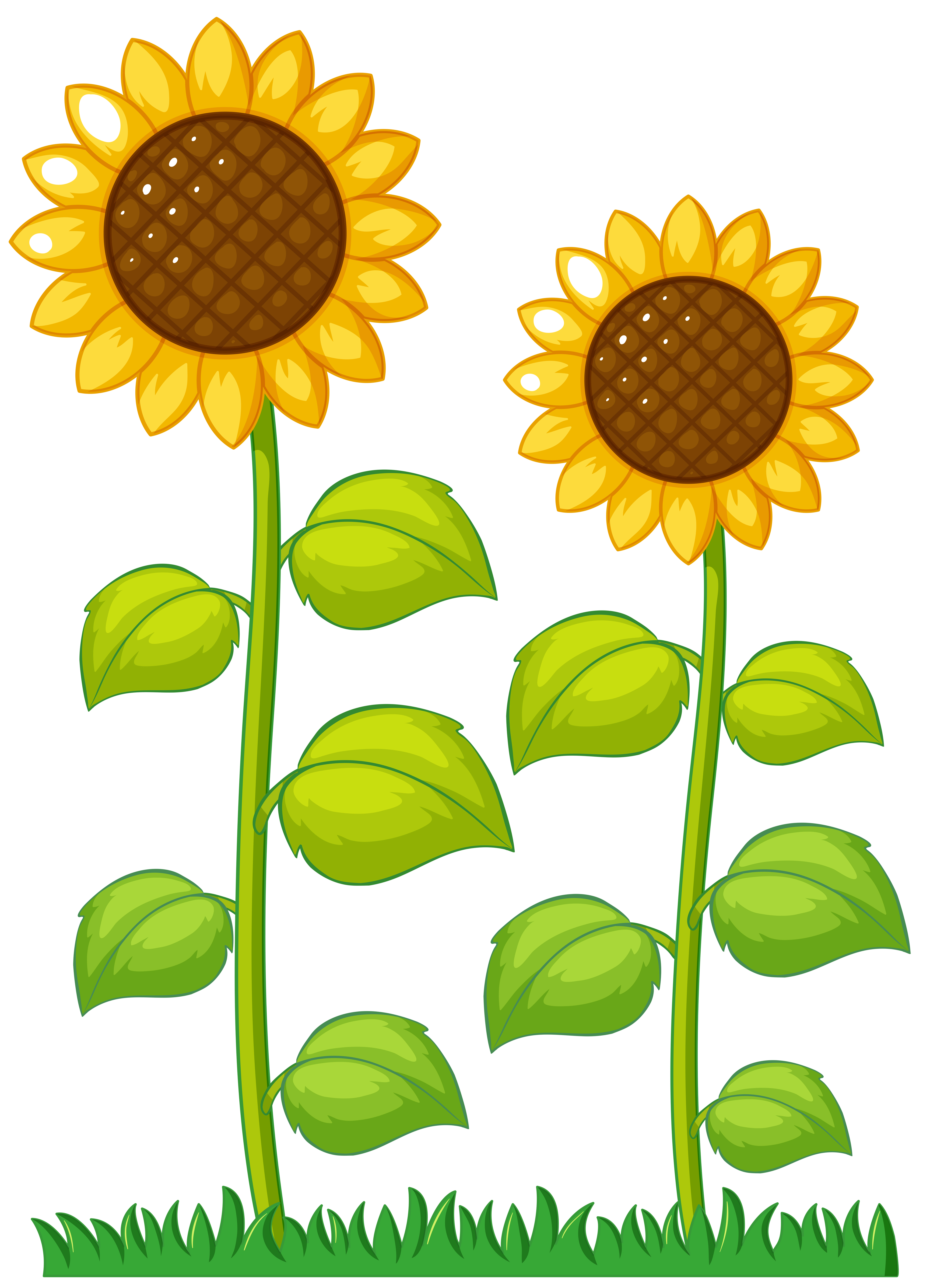 Two Sunflowers In The Garden Download Free Vectors Clipart Graphics Vector Art