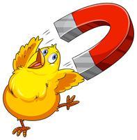 chickmagnet