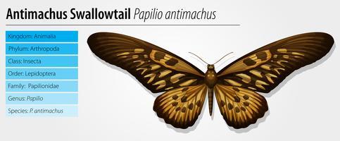 Jätteafrikansk Swallowtail