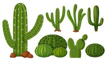 Différents types de cactus