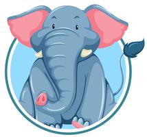 A elephant on sticker banner