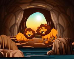 Lion living in the cave