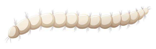 Loppa larva vit bakgrund