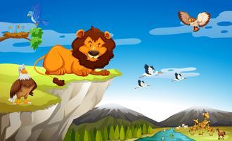 Veel wilde dieren op de klif