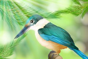 Oiseau coloré dans la nature