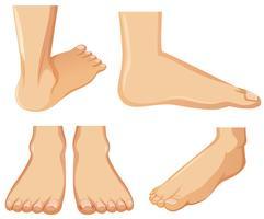 Anatomía del pie humano sobre fondo blanco