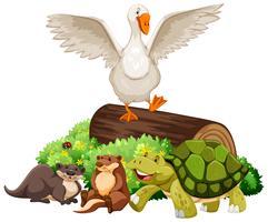 Dieren op het houten logboek