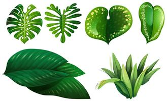 Different types of green leaves
