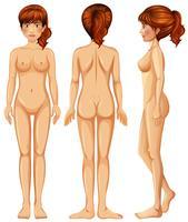 Un corps de jeune femme sur fond blanc