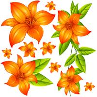 Wild flower in orange color vector