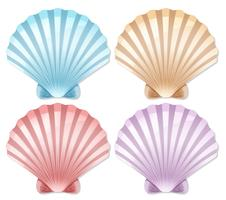 Set of color scallop shell vector