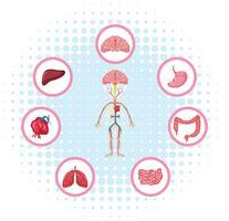 Diagram som visar olika delar av kroppen