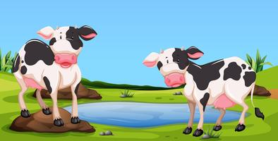 Two cows standing in farmyard