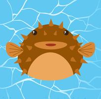 Puffer fish in Water Background