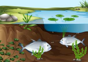 Dos peces nadando en el estanque