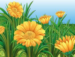 Campo, de, amarelo floresce, em, springtime