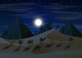 Caravana de camellos en el desierto en la noche