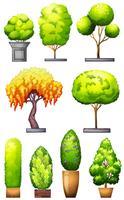 Conjuntos de plantas decorativas