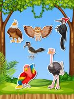 Set med olika fågelklistermärke