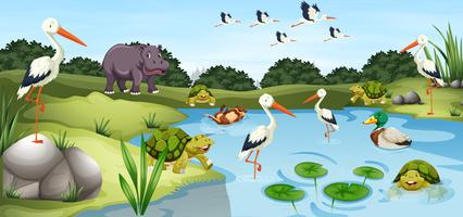 Many wild animals in the pond