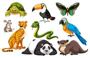 Different kinds of wild animals vector