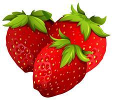 Fresas frescas sobre fondo blanco