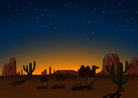 Silhouette Camels in Desert at Night