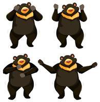 Een set bear shmoney-dansen