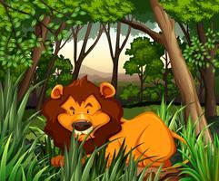 Leão que vive na floresta escura