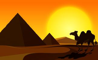 Pyramid and Camel with Desert Scene vector