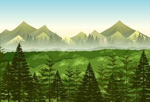 Background scene pine forest