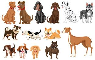 Set of dogs white background