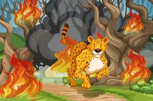 Tiger run away from wildfire
