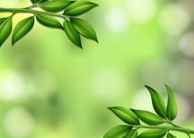 A natural leaf template