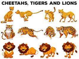 Set of cheetahs and tigers