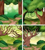 Set of rainforest background vector