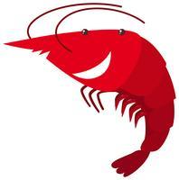 Red shrimp on white background